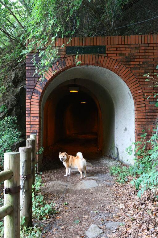 トンネルの入口